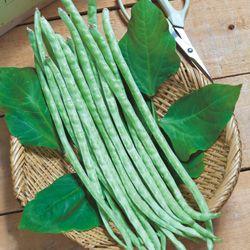 タキイネット通販/野菜のタネ(種子)/全品目から選ぶ/ササゲ/黒種三尺大長ささげ