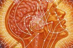 A Glândula Pineal e o Zumbido no ouvido