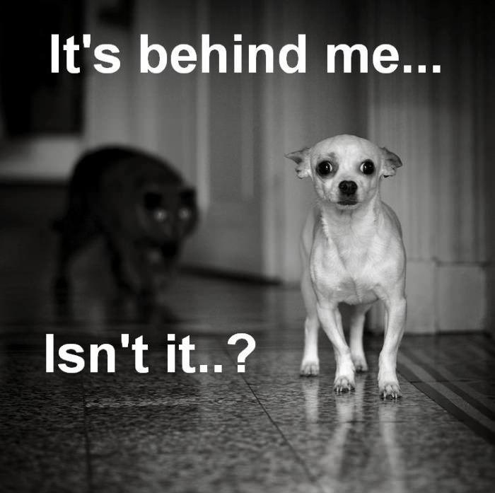 Yep. Don't turn around...