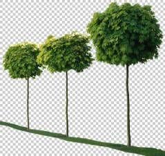 texture tree leaves alpha masked trees