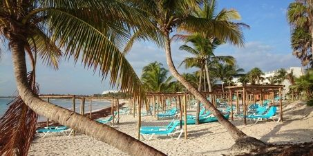 #seaturtle #conservation   These palapas were just built, illegally, on a turtle nesting beach. Please sign!
