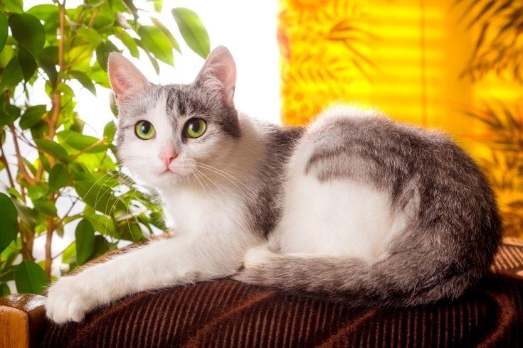 6 bonnes raisons d'adorer... le chat de gouttière