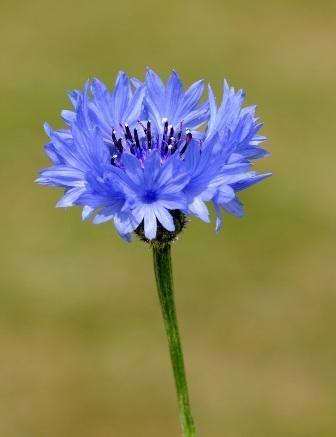 British Wild Flowers Awesome gardening ideas at farmersme.com