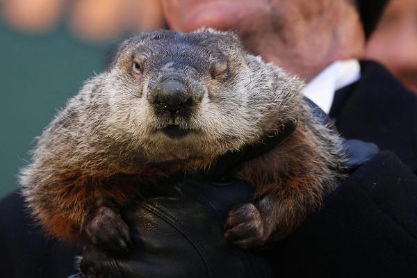 Groundhog Day: Punxsutawney Phil weighs in. 2.2.16, Punxsutawney, Pennsylvania.