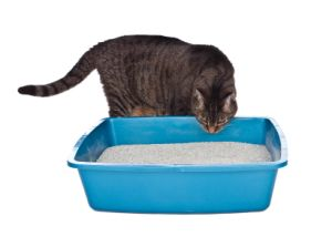 Use hot soapy water and a toilet brush to scrub out the litter box. Rinse and dry thoroughly before refilling. Letting it air dry in the sun can help with odors. NEVER use chlorine bleach to clean a litterbox. Urine turns into ammonia, and mixing chlorine and ammonia results in toxic chlorine gas, not good for you or kitty. Don't try to deodorize it with citrus oil cleaners or vinegar. Both citrus and vinegar are effective cat-repellants