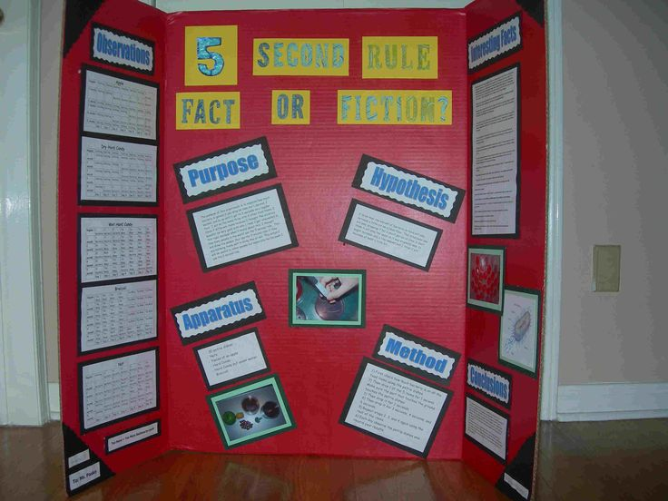 5 second rule project board | second rule fact or fiction?