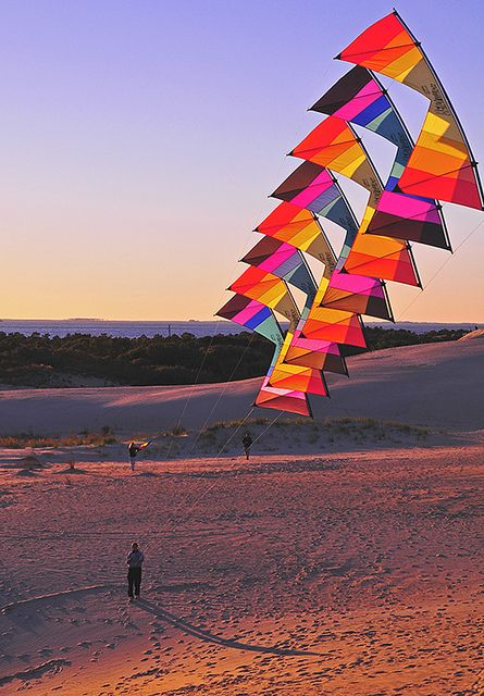 Kite flying at sunset on sand dunes in Kitty Hawk, Outer Banks, N.C.