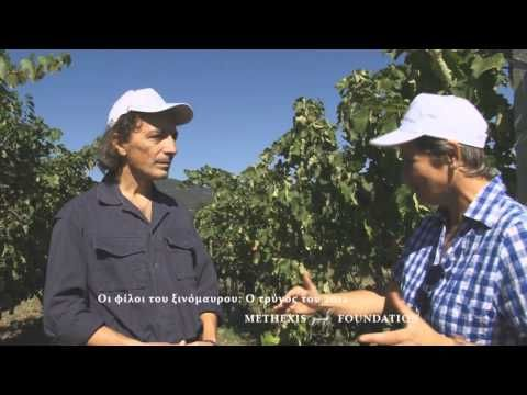ΦΙΛΟΙ ΤΟΥ ΞΙΝΟΜΑΥΡΟΥ: ΤΡΥΓΟΣ 2012, μέρος 2ο - YouTube