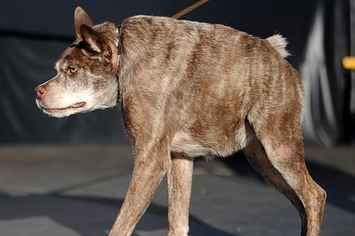 Meet The World's Officially Ugliest Dog