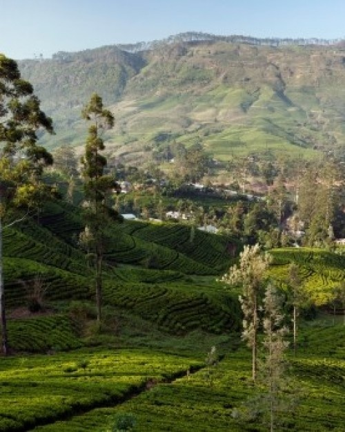 Relais & Chateaux - Tea Trails is perched at an altitude of 1250 m in Sri Lanka's Ceylon tea region, bordering the Central Highlands World Heritage site. Ceylon Tea Trails Sri Lanka #relaischateaux #landscape