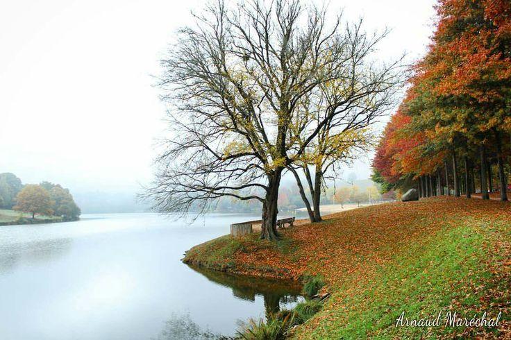 Un brin de couleur.  #courtille #gueret #limousin #creuse #nouvelleaquitaine #tree #arbre #automne #autumn #etang #lake #photodujour #pickoftheday
