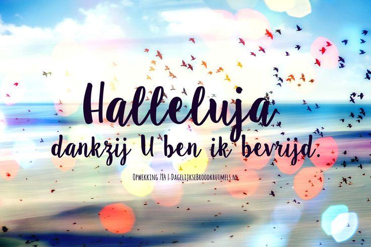 Halleluja, dankzij U ben ik bevrijd. Opwekking 784 #Bevrijder, #Opwekking  https://www.dagelijksebroodkruimels.nl/opwekking-784/