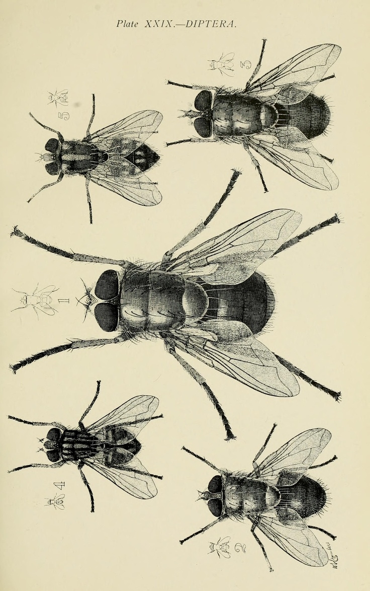 145 best Illustrations   Insects images on Pinterest   Beetles ...