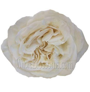 White Garden Rose Flower Jeanne Moreau at Wholesale