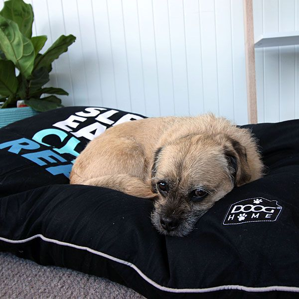Buy Online Pet Supplies Pet Shop Rspca Pet Warehouse Worldforpets Pet Warehouse Pet Shop Online Pet Supplies