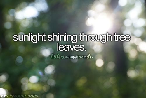little reasons to smile: sunlight shining through tree leaves.