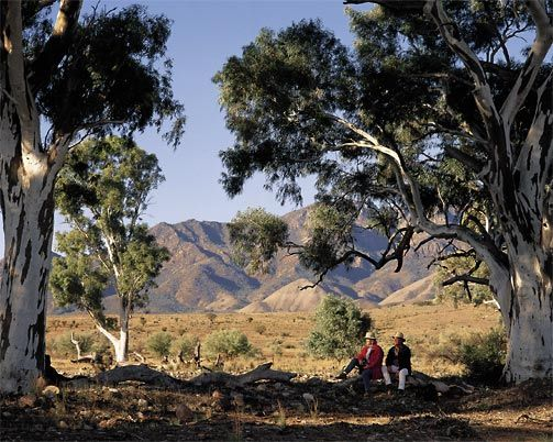 Flinders Ranges South Australia - a beautiful region with spectacular large white-barked eucalyptus trees.