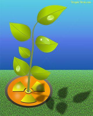 10 plantas que absorvem a radiação da sua casa