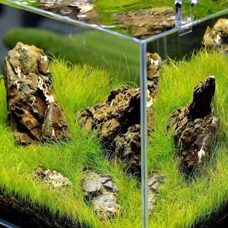 Magazyn Akwarium czasopismo akwarystyczne Pielęgnacja roślin akwariowych