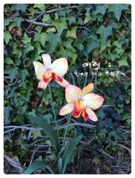 조화공예(아트플라워) 연구과정 카틀레야 Cattleya of art flower crafted http://blog.naver.com/koreapaperart  #조화공예 #종이꽃 #페이퍼플라워 #한지꽃 #아트플라워 #조화 #조화인테리어 #인테리어조화 #인테리어소품 #에바폼 #디퓨저 #주문제작 #수강문의 #광고소품 #촬영소품 #디스플레이 #artflower #koreanpaperart #hanjiflower #paperflowers #craft #paperart #handmade #카틀레야 #cattlleya