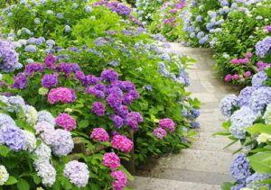 1000 id es sur le th me jardin d 39 hortensia sur pinterest for Conseil plantation jardin