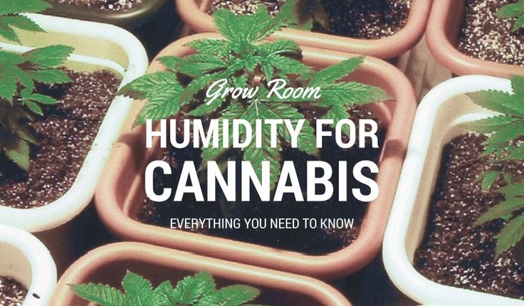Know what the humidity for cannabis in your grow room needs to be? We will tell you for each growing stage, and how you can raise & lower the humidity. Read the entire article: https://indoorgrowguru.com/grow-room-humidity-for-cannabis/