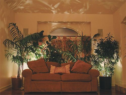 Accent Lighting For Indoor Plants My Style Pinterest