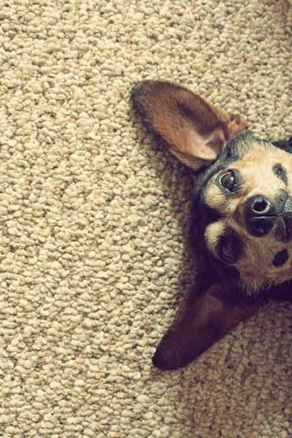 And, this is my dog.. haha, not really, but it definitely looks like her and her personality :)