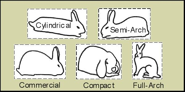 Rabbit Breeds and Body Types
