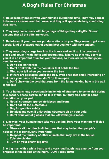 Dog's Rules for Christmas --great!
