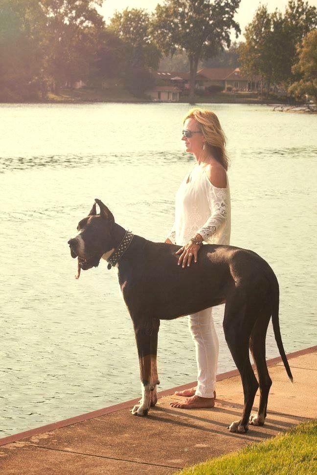 Pin By Virginia A Witman On Great Dane Dane Dog Great Dane