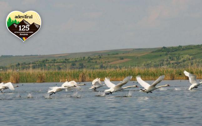 FOTO Minunea naturală din Larga Jijia, supranumită Delta Moldovei, locul unde poposesc anual peste 200 de specii de păsări exotice în drumul spre ţările calde