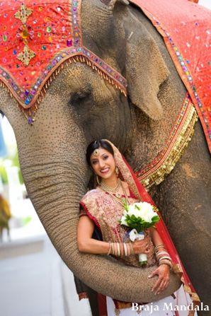 AWE OMG pic with an elephant!! http://maharaniweddings.com/gallery/photo/7366