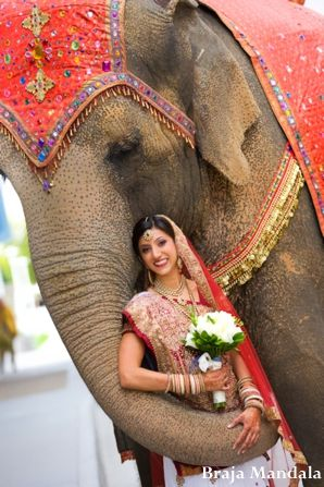 red,gold,Braja Mandala Wedding Photography,bridal bouquet,indian wedding bride,indian wedding bridal lengha,bridal lengha,indian bridal jewelry,ceremonial jewelry,traditional bridal dress,traditional wedding lengha,gold wedding jewelry,portrait with elephant,elephant portrait