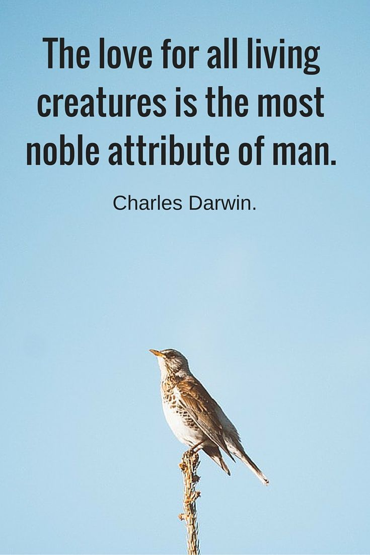 The love for all living creatures is the most noble attribute of man.Charles Darwin (1809-1882) #nature #quote