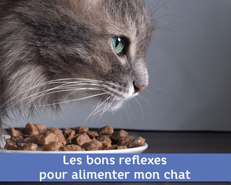 20 best Le mois du Chat images on Pinterest