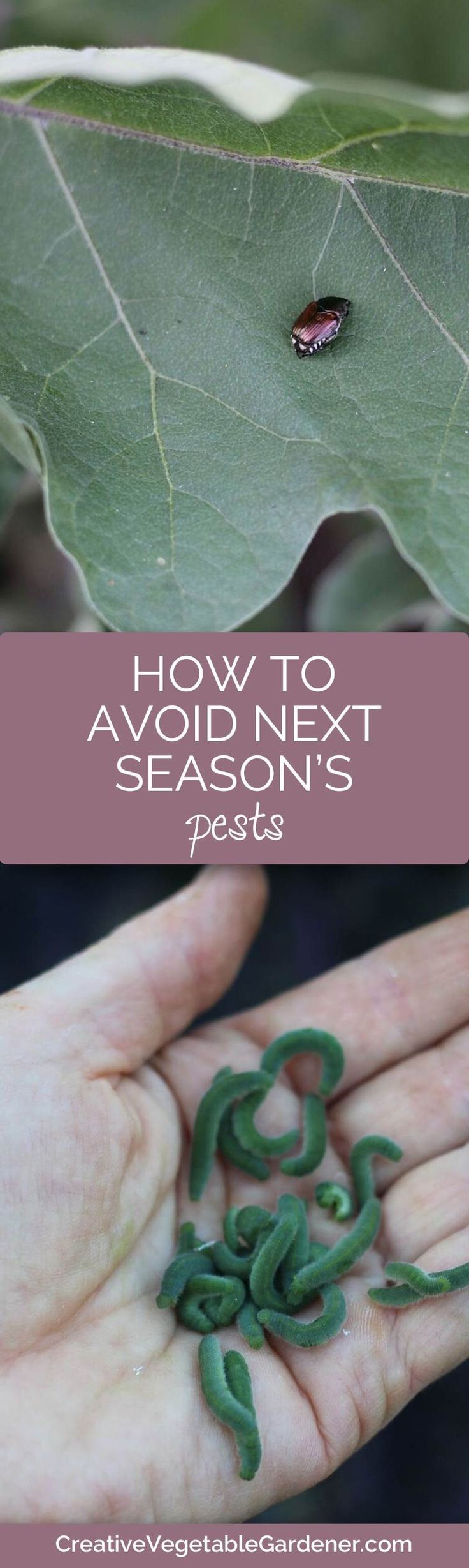 If you've had lots of pest problems in your garden this season here are some things you can do to prevent them next year.