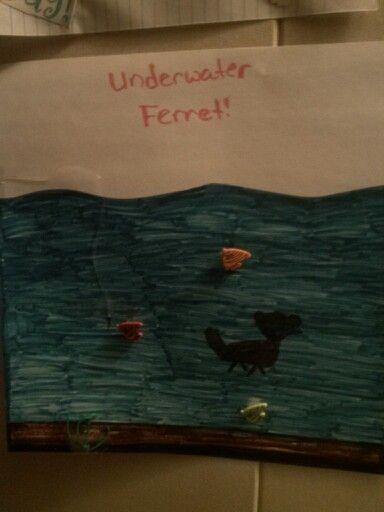 Underwater ferret