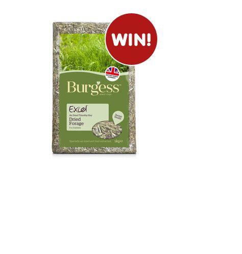 Win a 1kg bag of Burgess Excel Hay