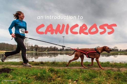 Canicross 101: Info, Gear, and Training Info   K9 of Mine