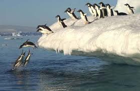 Afbeeldingsresultaat voor pinguins slide
