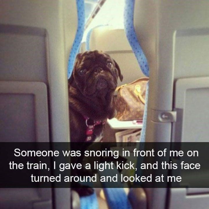 Funny Dog Memes That Will Keep You Laughing - 5