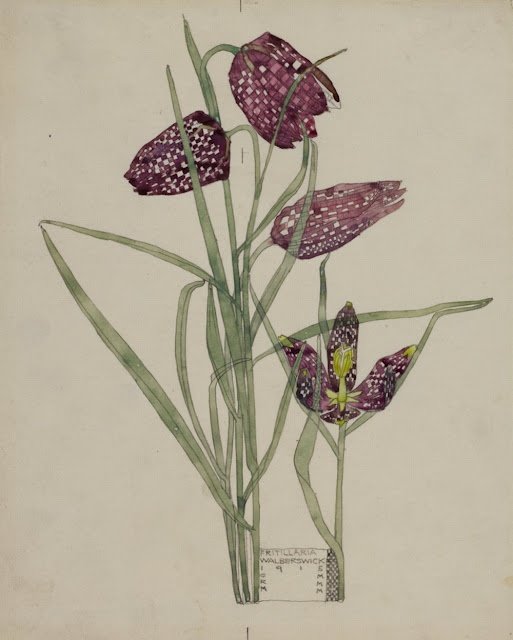 Fritillaria, 1915 watercolor and pencil, Charles Rennie Mackintosh