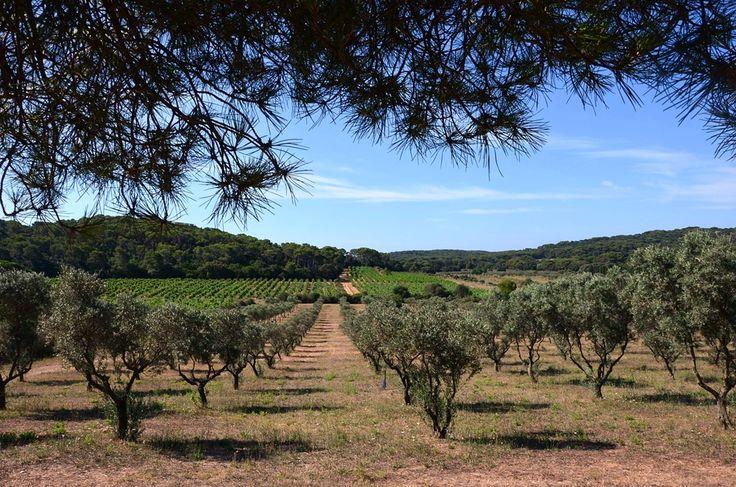Neste artigo vai ter acesso a diversas informações sobre as actividades agrícolas relacionadas com os olivais e as oliveiras, ao longo do ano.