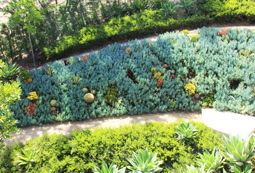 MilkWeed: Succulent Tapestry Lawn