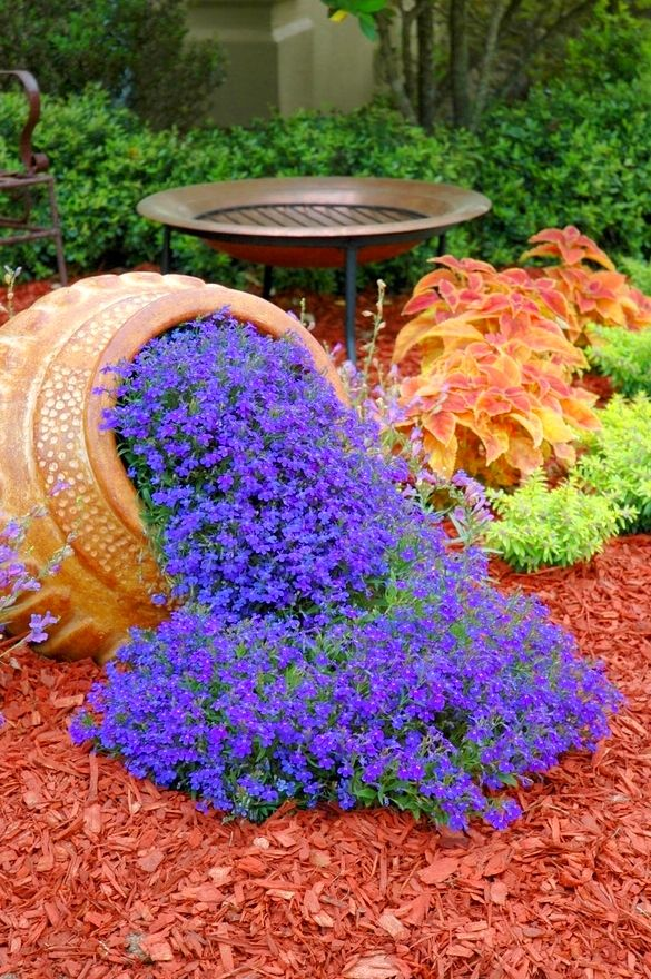 these beautiful blue flowers look like they are just spilling out, love it