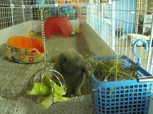Love this bunny-condo set up!