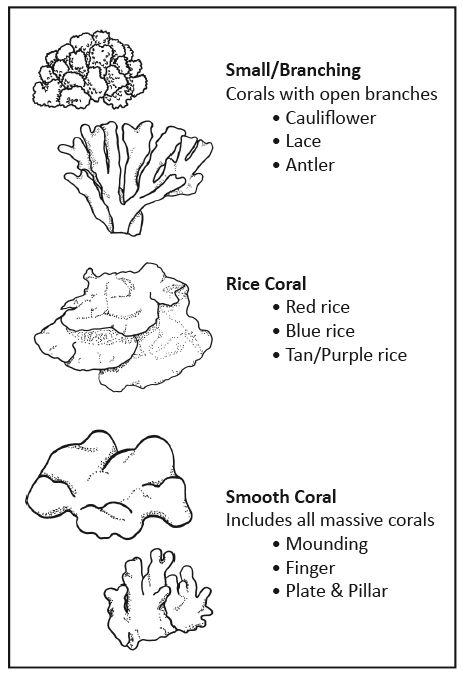how to draw a realistic coral reef step by step