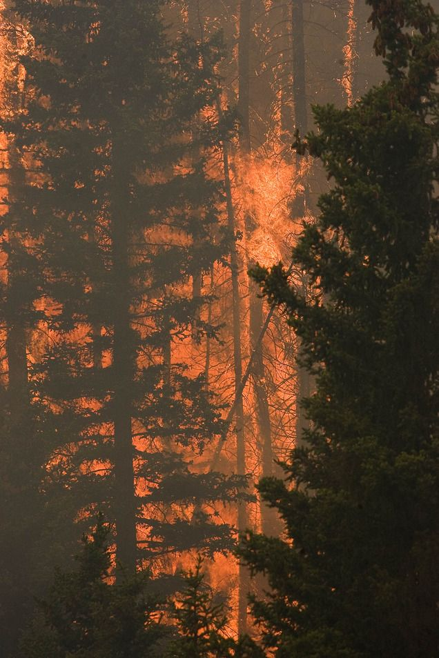 Trees explode into flames in Huntington Canyon on Wednesday, June 27, 2012, as the  Seeley Fire burns  in the Manti-La Sal National Forest. (Paul Fraughton  |  The Salt Lake Tribune)