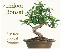 Brussel's Bonsai Nursery, Bonsai Trees and Accessories